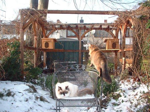 gefahren f r freilauf katzen cat kat poes katt felis. Black Bedroom Furniture Sets. Home Design Ideas
