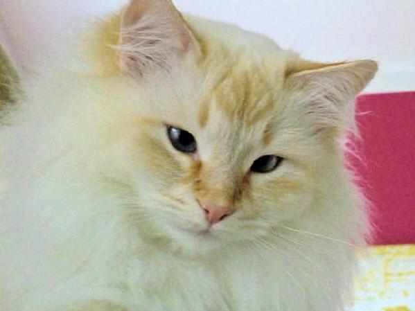 Film Cat Balou Youtube